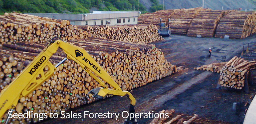 Seedlings_to_Sales_Forestry_Operations_2.jpg