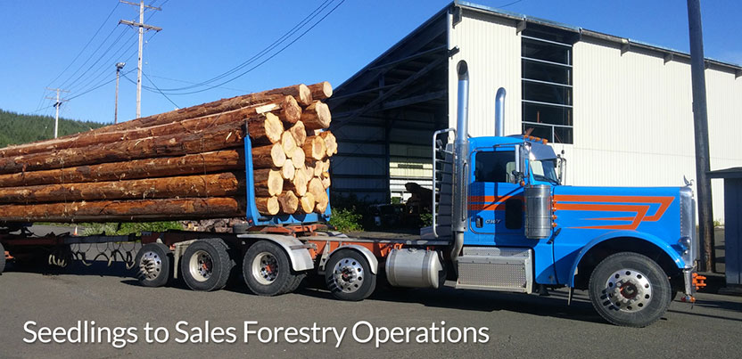 Seedlings_to_Sales_Forestry_Operations_3.jpg