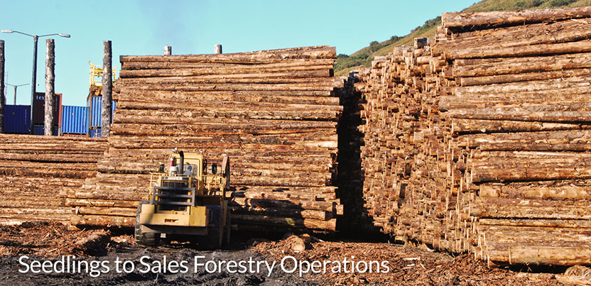 Seedlings_to_Sales_Forestry_Operations_4.jpg