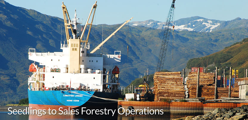 Seedlings_to_Sales_Forestry_Operations_1.jpg